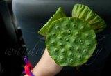 Green Cambodia_DSC1250